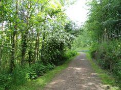 groene longen wandeling boom
