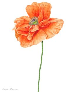 This vibrant orange poppy is the latest video class to be added to my online school