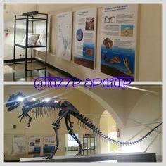 Museo Civico di Scienze Naturali E.Caffi / Bergamo