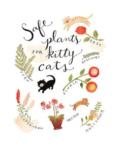 Safe Plants for Kitty Cats  Archival art print by Rebekkaseale, $30.00