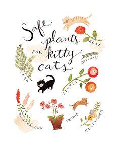 Safe Plants for Kitty Cats - @Carol Van De Maele Jeffrey
