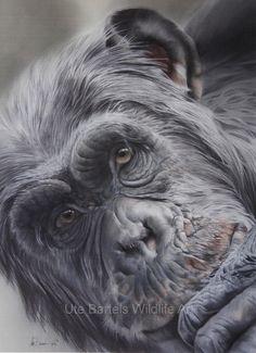 Daydream by Ute Bartels Equine Art, Primates, Wildlife Art, Daydream, Art Dolls, Sculpture, Drawings, Artist, Artwork
