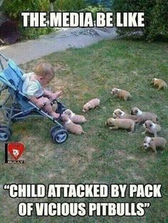 Pack of pitbulls. How vicious. It is true that some dogs (of any breed) are vicious. Like some humans can be. But do we try and kill all the violent humans as we do pitbulls? Funny Animal Memes, Dog Memes, Funny Animal Pictures, Cute Funny Animals, Funny Cute, Funny Dogs, Hilarious Memes, Funniest Pictures, Scary Dogs