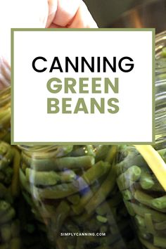 Canning green beans is a perfect food for newbies to try pressure canning for good reasons! It's quick and very easy with a fast processing time. Learn how to can green beans at #SimplyCanning #CanningGreenBeans #GreenBeans Corn Cob Jelly, Corn On Cob, Stewed Tomatoes, Canning Tomatoes, Canning Vegetables, Fresh Vegetables, Pear Butter, Dandelion Jelly, Can Green Beans