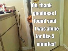 thank goodness I found you! Attack Of The Funny Animals - 40 Pics Funny Animal Pictures, Funny Animals, Cute Animals, Animal Funnies, Animal Quotes, Dog Funnies, Pet Humor, Animal Pics, Animal Memes