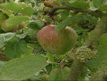 De avonturen van een appel (video)