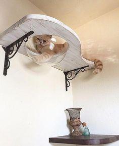 Cat Accessories That You Need - Cat Wall Ideas Cat Hotel, Diy Cat Tree, Cat Shelves, Shelf, Cat Playground, Cat Enclosure, Cat Condo, Cat Room, Pet Furniture