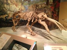 Gomphotherium evolved in the Early Miocene of North America and lived for about 10 million years from 13.650—3.6 Ma.