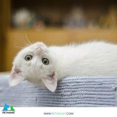 😅🥰 🐱 #kedi #kediler #kedicik #kedigiller #kedipatisi #kediasiklari #kedisevgisi #kedisizhayatcokbayat #kediaşkı #kediseverler #kediaski #kedilerisev #kedim #kedicik #kedicikler #kediaşkı #cat #cats #catstagram #catstagram #catlover #catsofinstagram #cats #hayvanlarısev #hayvandostu #hayvanlarıkoruyalım #hayvanlarısevin #hayvansevgisi #petsofinstagram #petslove #petstagram #pet #pethayat#yıldızparkı #gülhaneparkı #floryaatatürkormanı #zeytinburnutıbbibitkilerbahçesi #maçkaparkı… Cat Lover, Bird, Animals, Animales, Animaux, Birds, Animal, Animais