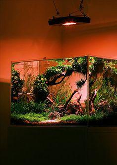 Мой аквариум-травник 90 литров (Лаурис) — 19834225730_cd91e9d785.jpg (40.62 КБ) 283 просмотра