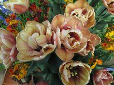 La Belle Epoque tulips! http://www.sarahraven.com/tulip_la_belle_epoque.htm