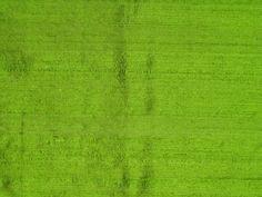 gorgeous green silk fabric