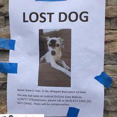 #Repost @furanimals17 ・・・ #Repost @boosfambam (@get_repost) ・・・ 🆘🆘🆘🆘LOST DOG IN LA JOLLA/SAN DIEGO AREA🆘🆘🆘 Please read above👆👆 #lostdog #sandiego #lajolla #puppy #dog #help #pleaseshare #network #gethimhome #getherhome #founddog #california #lajollalocals #sandiegoconnection #sdlocals - posted by Vera  https://www.instagram.com/animal_savior. See more post on La Jolla at http://LaJollaLocals.com