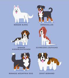 """""""Los perros del mundo""""   Perros suizos"""