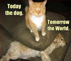 pinterest funny cats | funny cat sits on dog