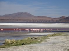 Bolivia - Salar tour - Day 2
