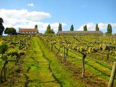 Three Choirs Vineyard, England