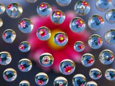 Flowers in Bubbles - cool, photography, flowers in bubbles