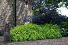 Black Lace Elder (Sambucus nigra 'Eva') in rear with lighter grass or lily underneath. Driveway Landscaping, Landscaping Plants, Sambucus Nigra Black Lace, Garden Art, Garden Design, Dutch Gardens, Annex, Ornamental Grasses, Green Plants