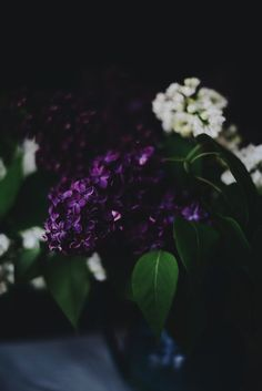The intense color of these lilacs is so beautiful. Lilac Tree, Lilac Flowers, Water Flowers, Love Flowers, Spring Months, Midnight Garden, Flower Power, Bloom, Lily