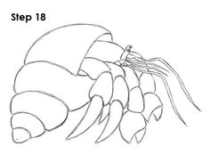 Learn How To Draw A Hermit Crab With This Video And Step By Drawing Instructions New Animal Tutorial Is Uploaded Every Week So Check Beck