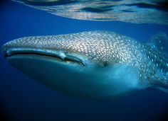 #Scuba #Aquatic Life at @Matty Chuah Scuba News