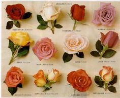Roses and their months.