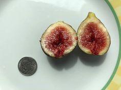 Marseilles Black (MBvs) Propagation, Figs, Plum, Fruit, Black, Black People, Fig