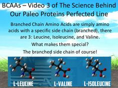 Paleo Proteins Perfected: Video 3 of 11; Benefits of Branched Chain A…