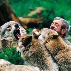 Wolfspark Werner Freund
