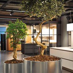 BM Luxury™ - www.contractbm.com #piantefinte  #pianteartificiali  #artificialplants  #bambuartificiali #verticalgardening  #verticalgarden  #giardiniverticali  #artificialplants  #pianteartificiali #hotel #alberghi #interni #arredointerni #design #designinterni #arredamento #arredamenti #architettura #architetti #spa #centribenessere #uffici #arredouffici #interiordesign #arredocasa #architecture #luxury #fashion #luxuryhome #moscow