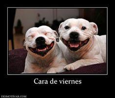 Imagenes chistosas de feliz viernes ~ Fotos e imagenes graciosas, chistosas y divertidas