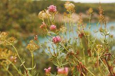 Lac de Bimont, Aix en Provence, France Aix En Provence, Provence France, Plants, Provence, Planters, Plant, Planting