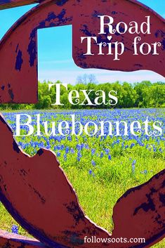To See Bluebonnets - Road Trip in Search of Wildflowers & Whataburger - Road Trip Packing, Road Trip Essentials, Packing List For Travel, Road Trips, Texas Roadtrip, Texas Travel, Travel Usa, Visit Texas, Visit Usa