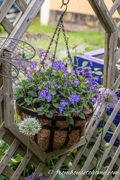 Container gardening in the shade can be a bit tricky. This list of blue plants for containers in the shade will have the pots on your patio, walkway or porch looking beautiful all summer long. Blue Plants, Tall Plants, Shade Plants, Flowering Plants, Shade Annuals, Potted Plants, Shade Flowers, Blue Flowers, Exotic Flowers