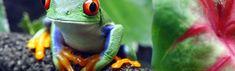 Wildlife Day Wildlife Day, Days Of The Year, Mother Nature, Animals, Animales, Animaux, Animal Memes, Animal, Animais