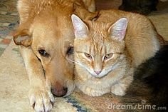 A pair of pets, a cat and a dog.