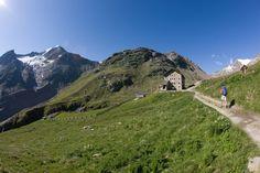 Treffen Sie Steinböcke und Murmeltiere in den Bergen Tirols See marmots and ibexes in the wild in the Oetztal Valley