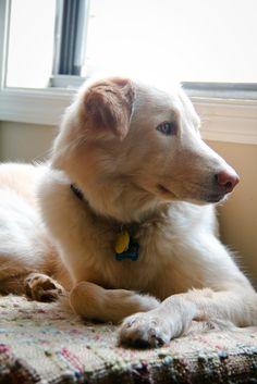 my sweet pup dog