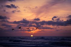 Birds at sunset by amine saghir on 500px