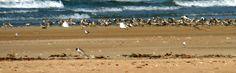 Untuk Traveler yang ingin menikmati sunset di #Darwin dengan suasana yang tenang, Lee Point Beach bisa menjadi pilihan nya. Karena pantai ini tidak cukup ramai dikunjungi oleh wisatawan. Ayo liburan ke Darwin, #Australia. Miliki kesempatan untuk terbang ke Darwin GRATIS! Ikuti promo anniversary #NusaTrip yang ke 3, kunjungi halaman http://goo.gl/ZBGmyG untuk info lengkap nya.   *Syarat dan ketentuan berlaku   Photo: Experiencethewild website
