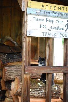 Hubba Hubba Smokehouse, courtyard kitties!