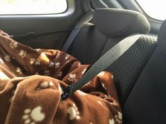 Cheap Safe Dog Car Seat : 10 Steps (with Pictures) - Instructables Pet Booster Seat, Truck Bed Camping, Car Seat Protector, Floor Protectors For Chairs, Mid Century Modern Armchair, Dog Car Seats, Dog Beach, Yorkie, Living Room
