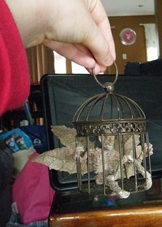 Mummified fairy in a cage. The fairy is made from a small plastic skeleton, stocking and liquid nails. Mummified fairy in cage Halloween Ideas, Halloween Decorations, Dark Fairies, Liquid Nails, Halloween Miniatures, Black Goth, Creepy Dolls, Sprites, Skeletons