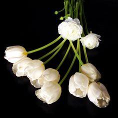 Tulpaner och ranunkel