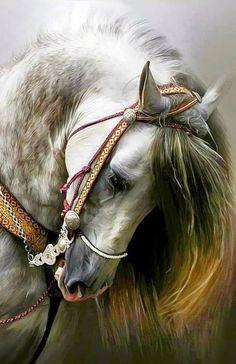 Cute Horses, Pretty Horses, Horse Love, Horse Photos, Horse Pictures, Most Beautiful Horses, Animals Beautiful, Beautiful Beautiful, Animals And Pets