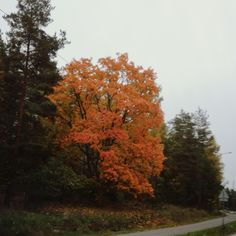 #Finland #autumn #fall #colors #niceview #tree #syksy