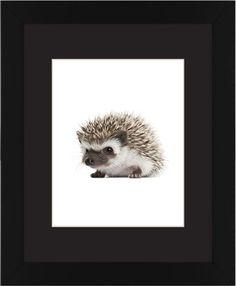 Baby Hedgehog Framed Print, Black, Contemporary, Cream, Black, Single piece, 11 x 14 inches