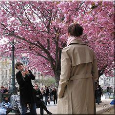 (IMAGENES) FRANCIA   PRIMAVERA EN PARIS  - Paris spring
