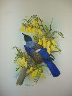 Lovely illustration of a New Zealand Tui bird.